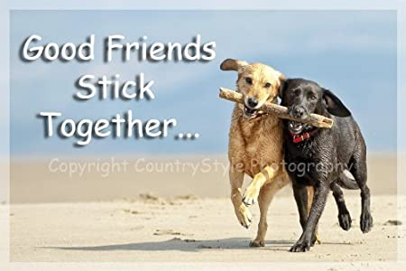 "Image result for dogs and ""good friends stick together"""
