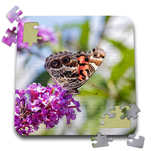 3dRose Danita Delimont - Butterflies - American Lady on Butterfly Bush, Marion County, Illinois - 10x10 Inch Puzzle (pzl_314824_2)