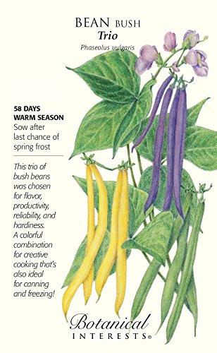 Trio Bush Bean Seeds - 60 grams - Snap Bean