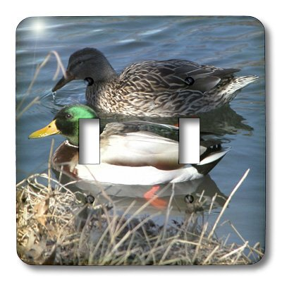 lsp_11549_2 Beverly Turner Photography - Mallard Duck Couple - Light Switch Covers - double toggle switch