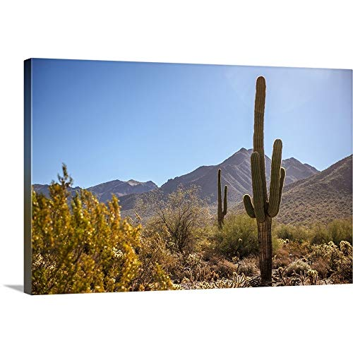 GREATBIGCANVAS Gallery-Wrapped Canvas Entitled Saguaro Cactus in Phoenix, Arizona by Circle Capture 30