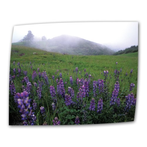 Art Wall Figueroa Mountain with Fog 32 by 48-Inch Flat/Rolled Canvas by Kathy Yates with 2-Inch Accent (Accent Mural)