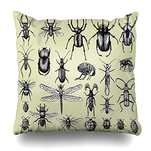 DIYCow Throw Pillows Covers Big Insects Bugs Beetles Bees Many Species Vintage Old Engraved Home Decor Pillowcase Square Size 16 x 16 Inches Cushion - Pillow Beetle