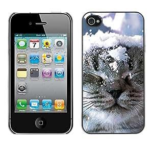 YiPhone /// Prima de resorte delgada de la cubierta del caso de Shell Armor - Norwegian Forest Cat Snow Winter Kitten - Apple iPhone 4 / 4S