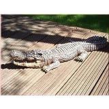 44077 Krokodil 77 cm Gartendekoration Deko