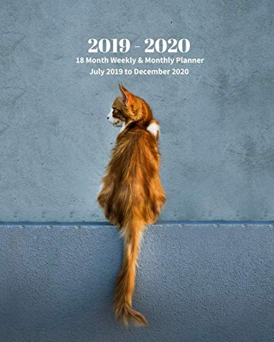 2019 - 2020 | 18 Month Weekly & Monthly Planner July 2019 to December 2020: Cat on the Wall Cats Kittens Pets Monthly Calendar with U.S./UK/ ... Holidays- Calendar in Review/Notes 8 x 10 in.