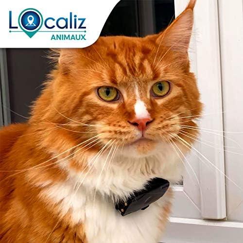 LOCALIZ Lookat localizador GPS para Gato y Perro pequeño: Amazon.es: Productos para mascotas