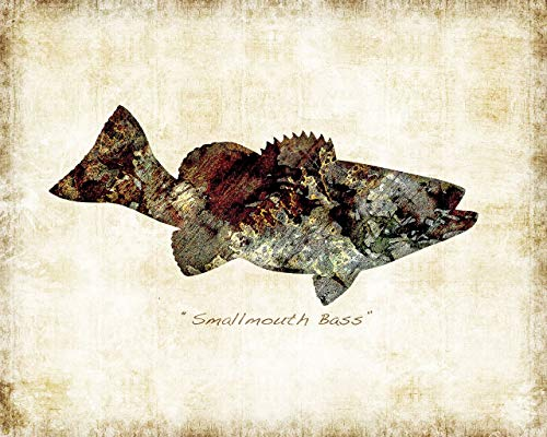 (Smallmouth Bass Freshwater Fish Watercolor Art Print by Dan)