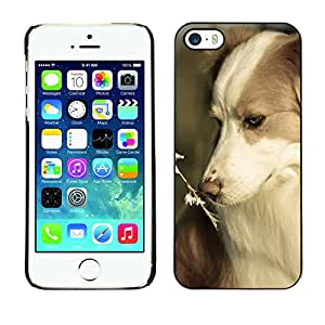 Border Collie Corgi Pet Summer Dog Nature - Metal de aluminio y de plástico duro Caja del teléfono - Negro - Apple iPhone 5 / iPhone 5S