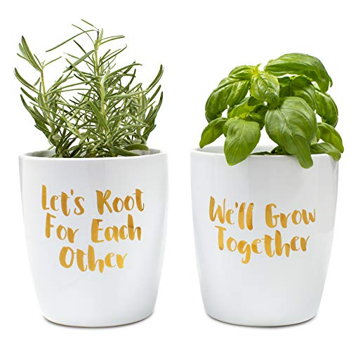 Thoughtfully Gifts, Two Positively Punny Planters, Grow Your Own Herb Gift Set, Includes Two Ceramic Modern Plant Pots with 4 Soil Pods, Rosemary and Basil Seeds