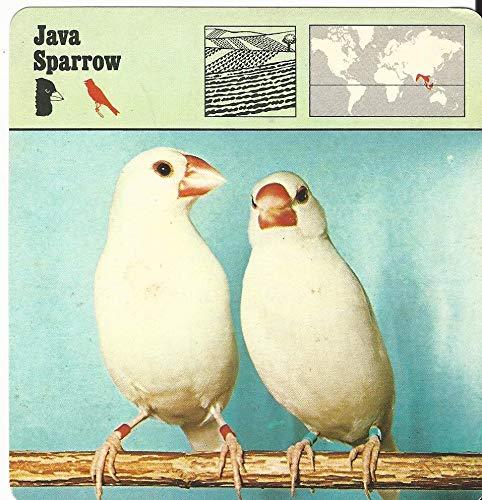(1975 Editions Rencontre, Animals Card, 24.590 Java Sparrow)