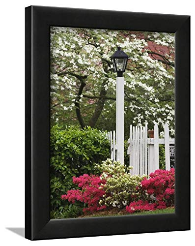 ArtEdge Azaleas and Flowering Dogwood Tree Along White Picket Fence by Adam Jones, Black Wall Art Framed Print, 12 x 9, Unmatted