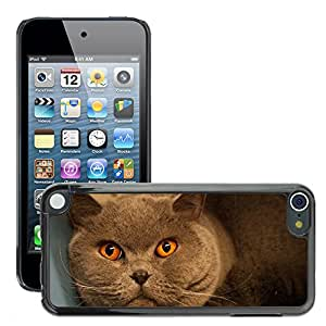 Cas Coq Case Cover // M00146345 Gato Naranja Gris // Apple ipod Touch 5 5G 5th