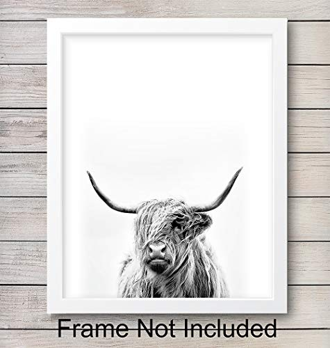 Highland Cow Wall Art Print - Ready to Frame (8X10) Photo - Home Decor - Makes a Great Gift for Bedrooms, Kitchens, Home Office and Living Rooms - Great for Ranch - Bull With Big Horns