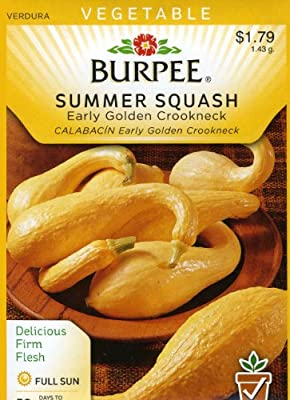 Burpee 64683 Squash, Summer Early Golden Crookneck Seed Packet