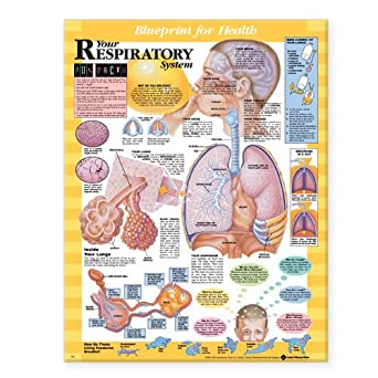 Blueprint for health your respiratory system chart anatomical chart blueprint for health your respiratory system chart malvernweather Image collections