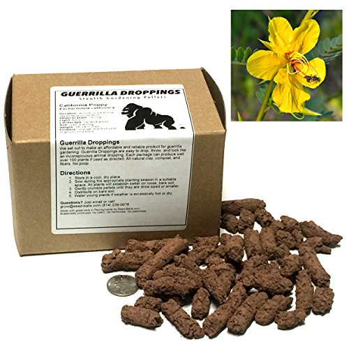 - Partridge Pea Guerrilla Droppings - Seed Pellets for Guerrilla Gardening (Chamaecrista fasciculata)