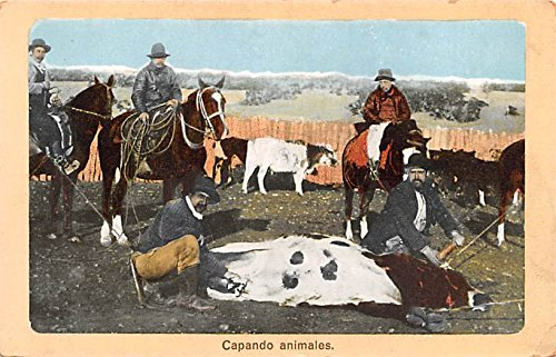 Capando Animales Republic of Chile Postcard