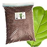 Fiddle Leaf Fig Soil by Perfect Plants-8QTS, Professional Blend for All Fiddle Leaf Figs