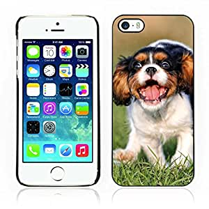 Hot Style Cell Phone PC Hard Case Cover // V0000860 Dog Puppy Pattern // Apple Iphone 5 5S