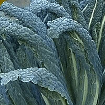 Everwilde Farms - Organic Lacinato Kale Seeds - Gold Vault Seed Packet