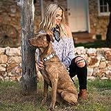 Wolfgang Man & Beast Premium USA Webbing Dog