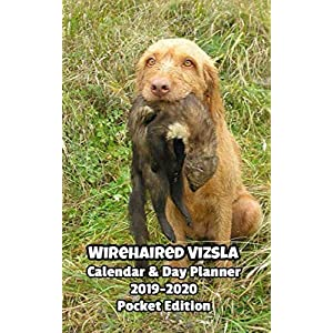 Wirehaired Vizsla Calendar & Day Planner 2019-2020 Pocket Edition 48