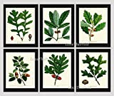 good will hunting edited - Botanical Print Set of 6 Antique Beautiful Redoute Acorn Tree Branch Green Leaf Nuts Forest Nature Home Room Decor Wall Art Unframed