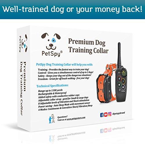 Dog Shock Collar Off Leash Training