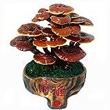 Mushroom Ganoderma lucidum Mushrooms bonsai