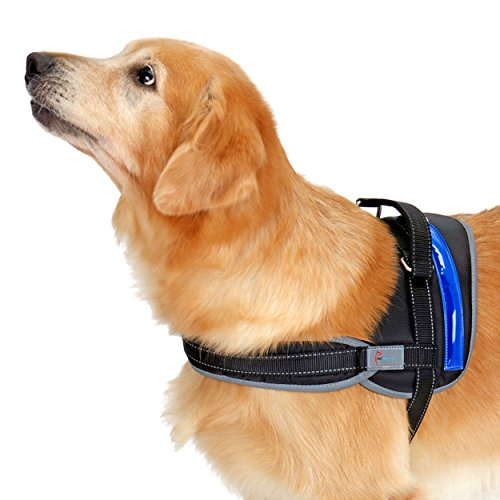 Pet Industries [Blowout Sale!] Heavy Duty Reflective Dog Harness with Safety Features [Premium Edition] Available in 4 Sizes, Specially Designed for Medium-Large Dog Breeds (XX-Large, Electric Blue) ()