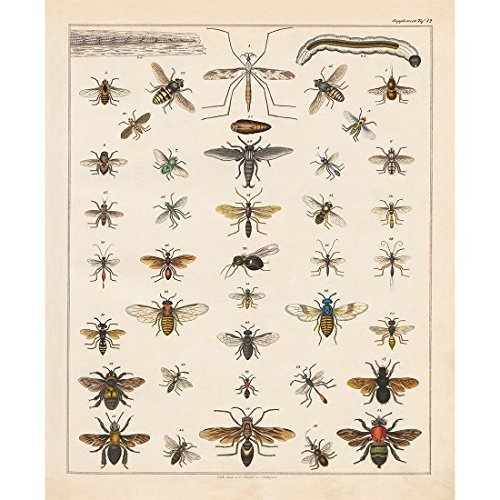 Identification Chart - Vintage Poster Print Art Insects Identification Reference Collection Entomology Diagram Chart Bee Hexapod Wall Decor