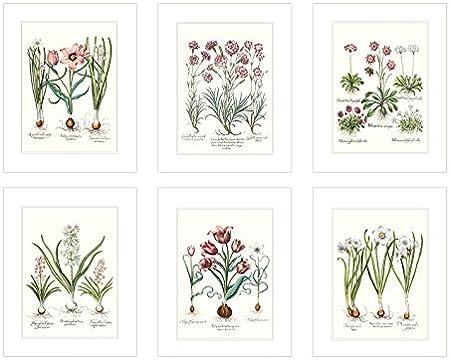 VINTAGE STYLE FLOWER PRINTS 8x10/'/' Botanical Art Poster Set Picture Flower Pink