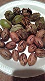 Pecan tree seeds(20 seeds)fresh this season's harvest from my own garden