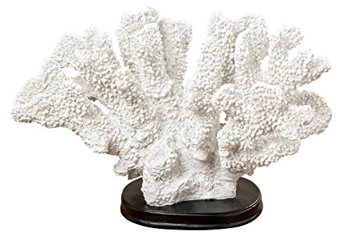WHW Whole House Worlds Realistic Faux White Coral Statue, Realistic Fan Shaped Specimen, Tendrils, Beveled Dark Gallery Base, 6 1/4 Diameter, 10 1/4 Inches Long, Crafted by Hand, Cast Poly Resin