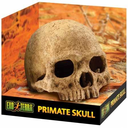 - Exo Terra Terrarium Decor Primate Skull