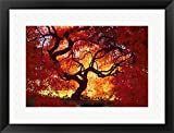 Japanese Maple, Darien, Connecticut by Alison Jones / Danita Delimont Framed Art Print Wall Picture, Black Frame, 24 x 18 inches