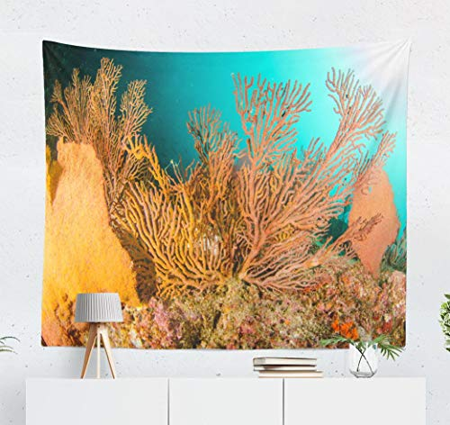 Deronge Reef Tapestry, Colorful Beach Underwater Coral Reef and Water Mexico Tapestry Wall Hanging Decor 50x60 Inch Wall Art Tapestry for Men Bedroom Decorative Tapestry Dorm Decor,Colorful Beach