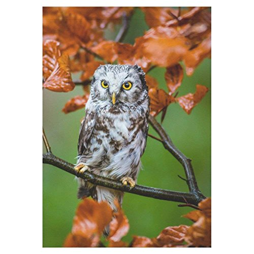 Pingshoes Boreal Owl on Tree Branches Polyester Garden Flag