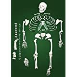 Vision Scientific VAS220-A Full Size Disarticulated Human Skeleton (21.1