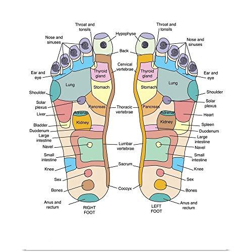 GREATBIGCANVAS Poster Print Entitled Reflexology Foot map, Artwork by Peter Gardiner 16