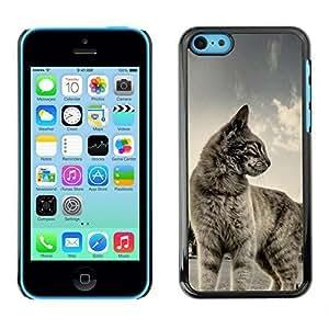 New Fashion Case BLOKK case cover / Apple iphone 4s / cat shorthair house pet mNz3umj6I3i blue grey cute kitten / Slim Black Plastic case cover case cover Armor