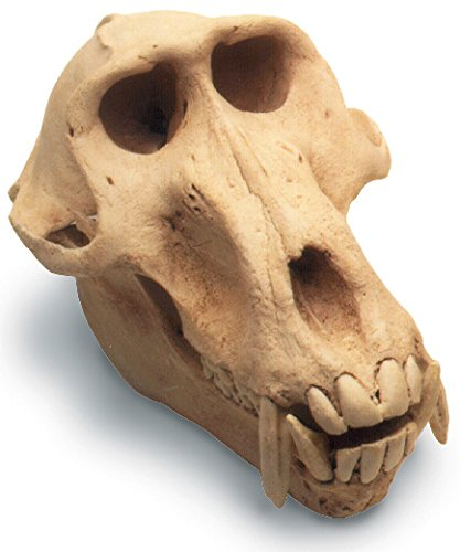 Skullduggery 0211-1 Baboon Skull W/Stand - 0211-1 for sale  Delivered anywhere in USA