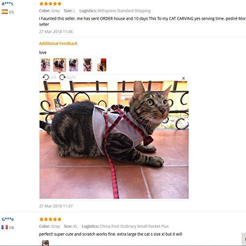 Correa Arnés de gato for mascotas con correa Chaqueta de estilo ...
