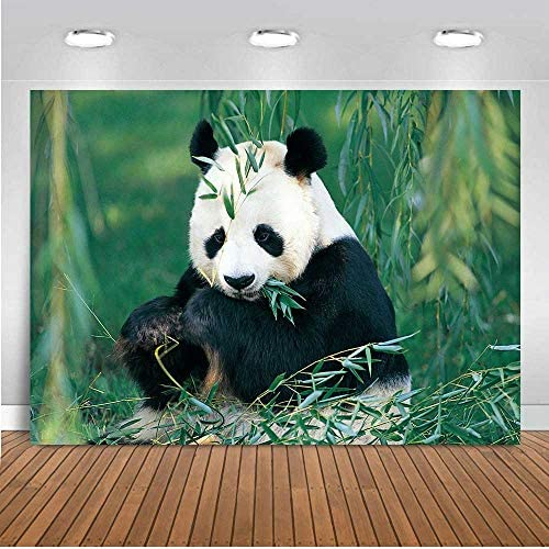 Panda Eat Bamboo Leaves Photography Backdrop 5x7ft Jungle Safari Theme Birthday Party Backdrop for Kids Baby Shower Forest Wild Animal Vinyl Photo Backdrop Studio Photo Booth Props TVV074 LELEZ