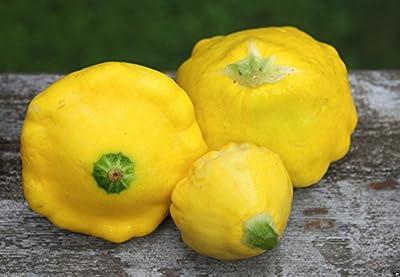 100 Patty Pan Squash (Scallop) Summer Squash, Scallop Yellow Bush Squash Seed