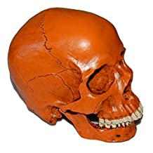 ISEYMI Imitation Human skull Halloween Props Home Decorations Medical Teaching Resin Bar Accessories 7.5*6*4inch