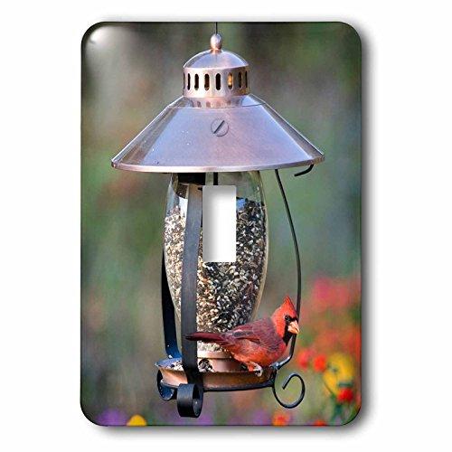 3dRose lsp 208643 1 Northern Cardinal Lantern