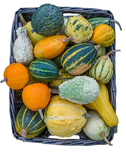 Burpee Ornamental Small Fancy Gourds Mix Gourd Seeds 50 - Gourds Ornamental