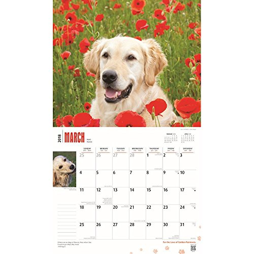 For the Love of Golden Retrievers 2018 Deluxe Wall Calendar Photo #2